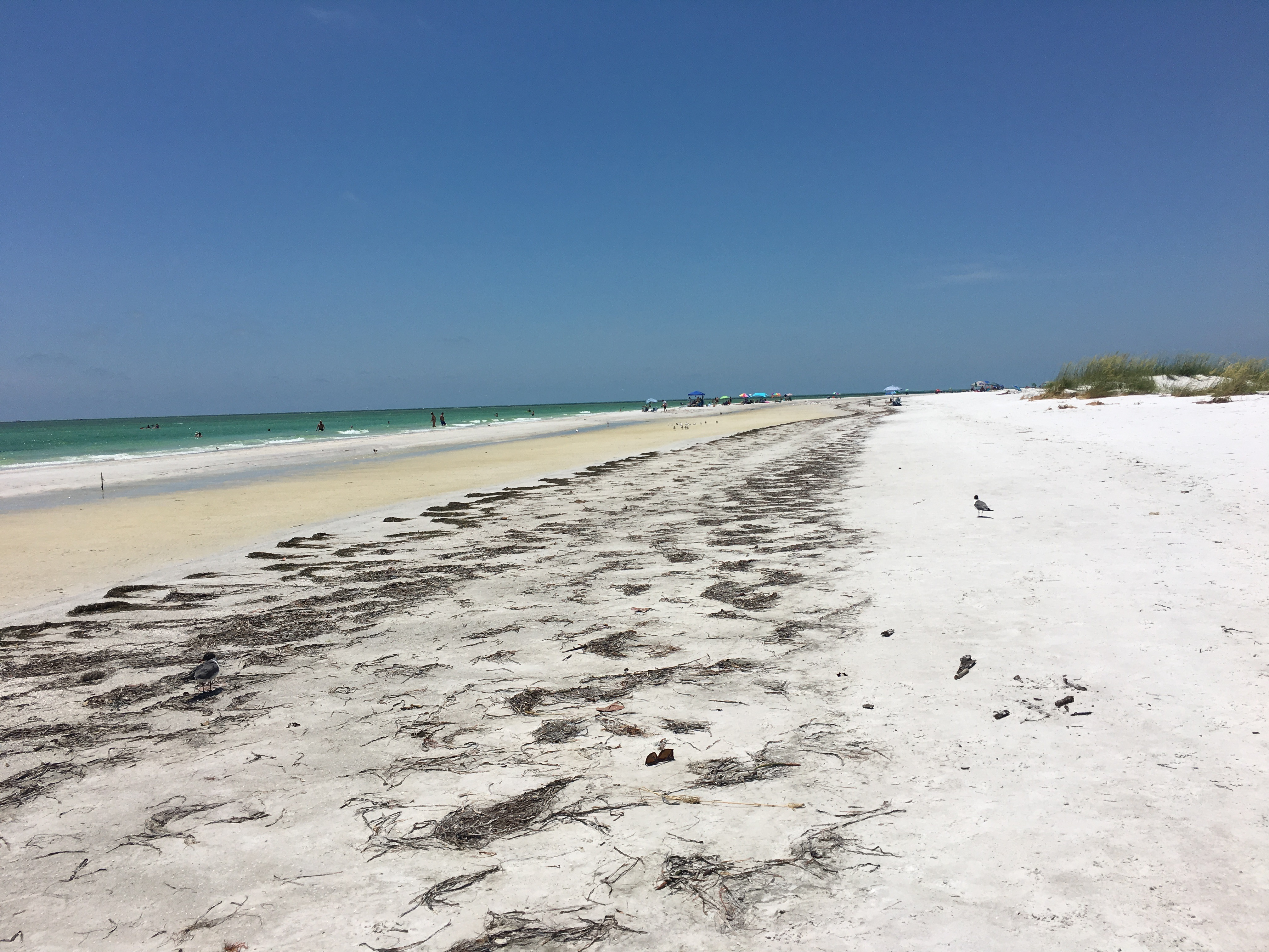 5 Resons to Visit Anna Maria Island, Florida. Where to eat, where to stay and which beaches to visit. #florida #beaches #annamariaisland